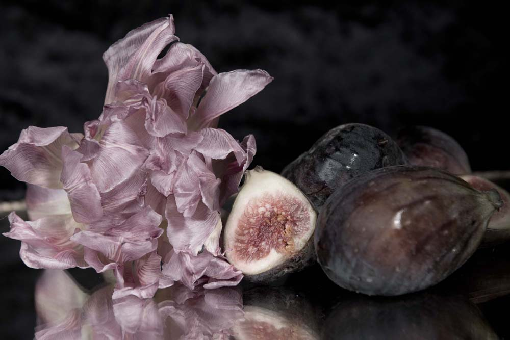 Lilac Fig and Rose